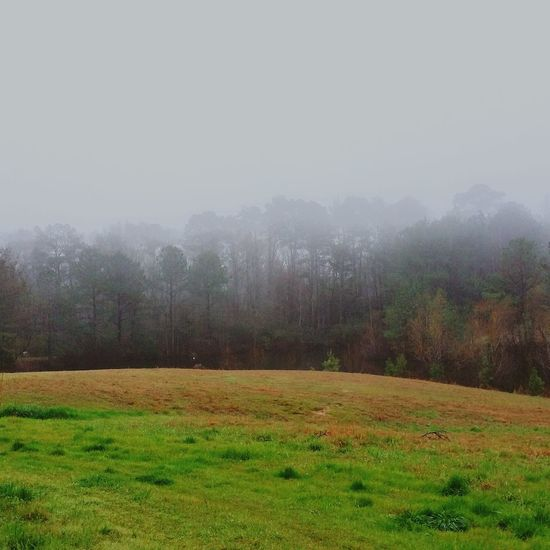 Fog Pasture In The Mist Depressing Day Gloomy Green Grass Spring Coming Foggy Day Fog Rolling In Trees In The Mist Nature Photography Weather Photography Landscape_photography Landscapes With WhiteWall