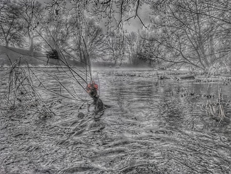 Nature Full Frame Backgrounds Bridge View Foggy Weather Tree Nature Riverside View River Collection Riverwalk Walking Around River Severn In Newtown, Winter Riverside Riverview Outdoors River Side From My Point Of View For Friends That Connect  Popular Photos Water Black And White With A Splash Of Colour Colour Splash Winter Trees Winter River Hdr_Collection