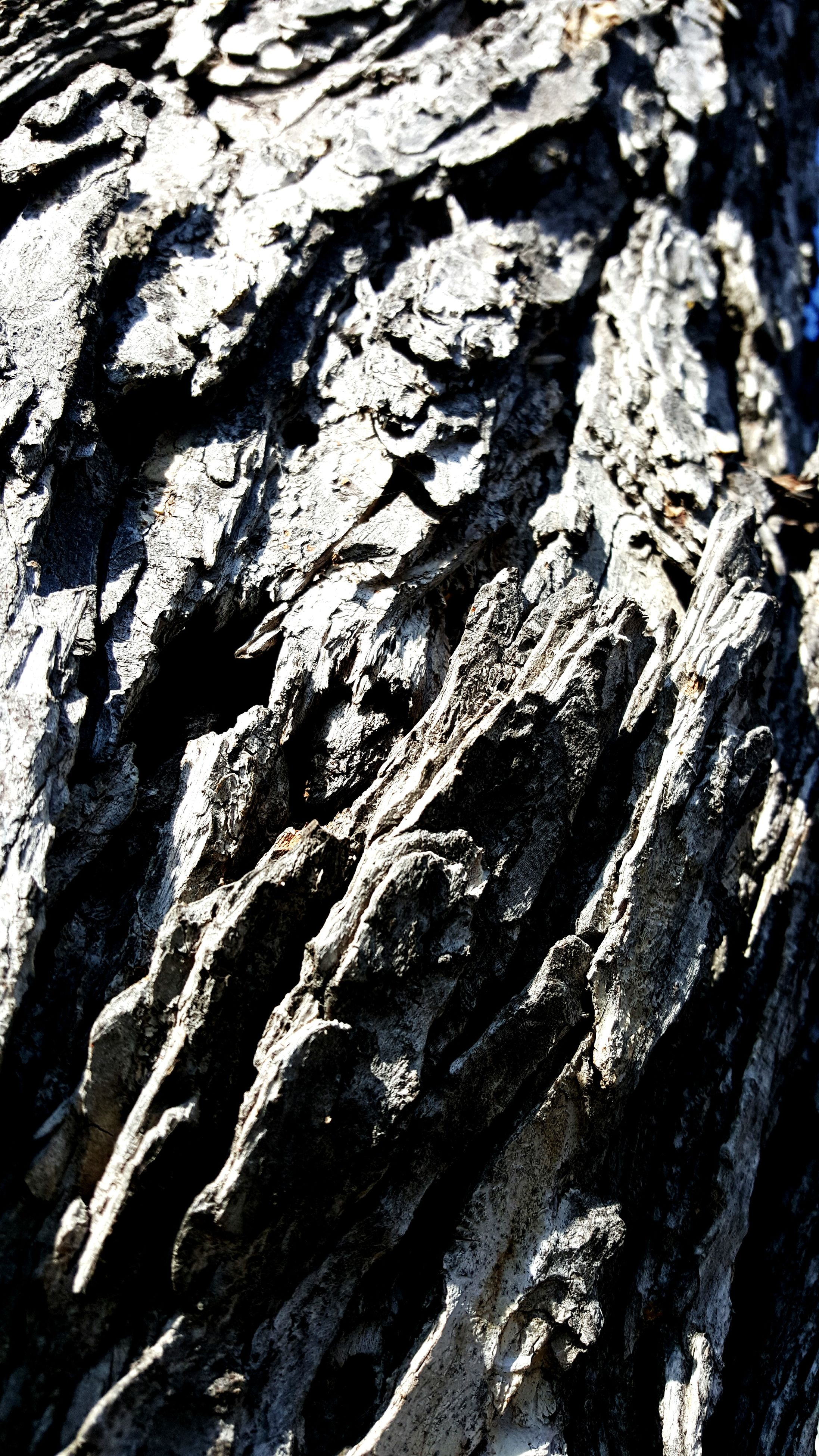 textured, full frame, rough, backgrounds, close-up, tree trunk, nature, bark, natural pattern, pattern, detail, no people, day, outdoors, wood - material, high angle view, tree, weathered, brown, cracked