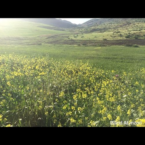 Spîdêbâš Kurdistan Kurd Kêskatî Green Gul Goodmorning Happy Nature IPhon6 IPhone iPhonephotographer Photographer
