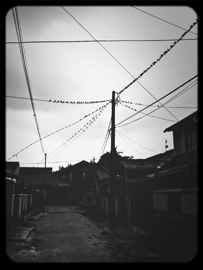 Blackandwhite Urban Birds
