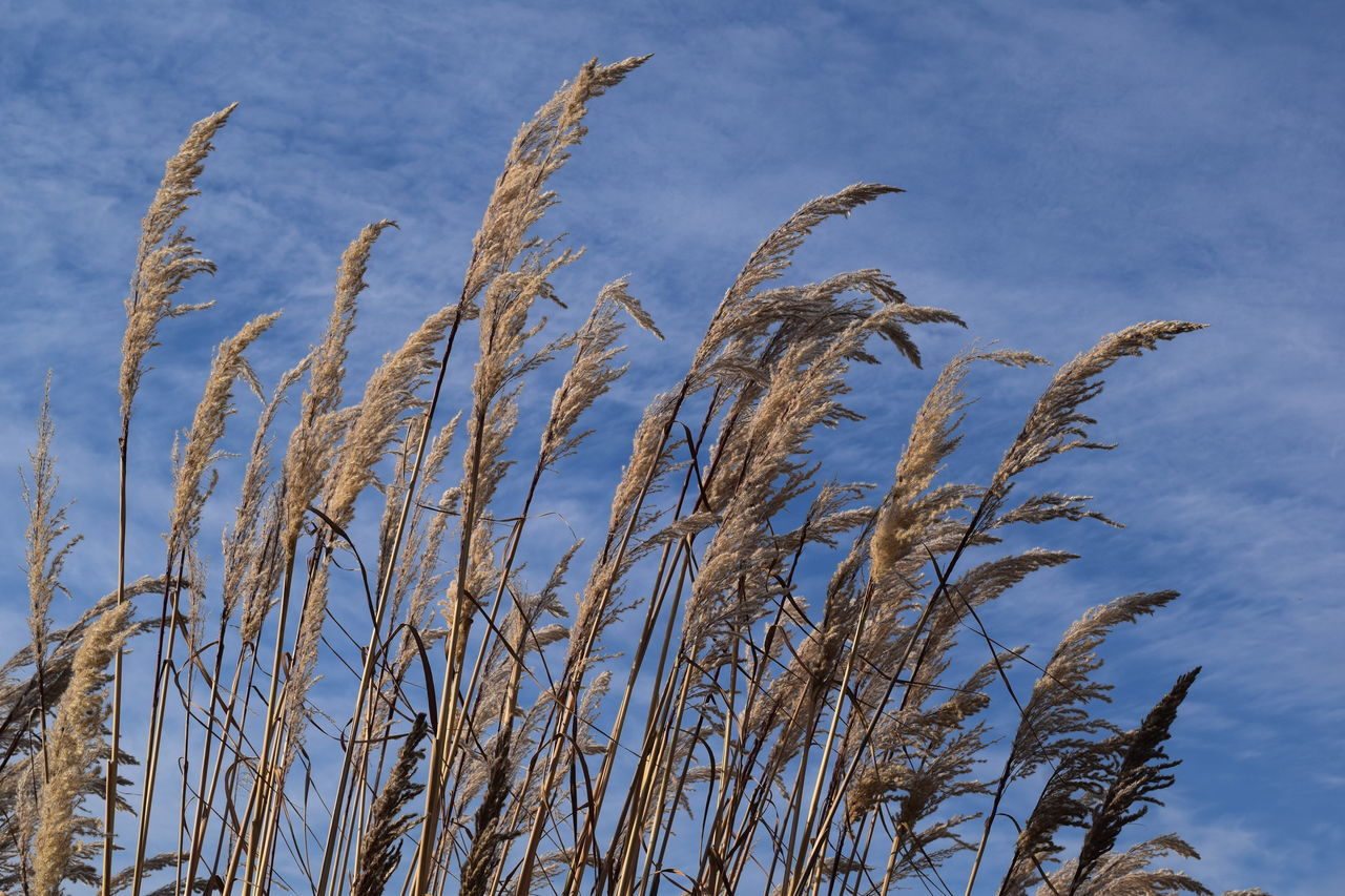 Decorative Grass Beauty In Nature Blue Blue Skies Close-up Decorative Grass Fall No People Outdoors