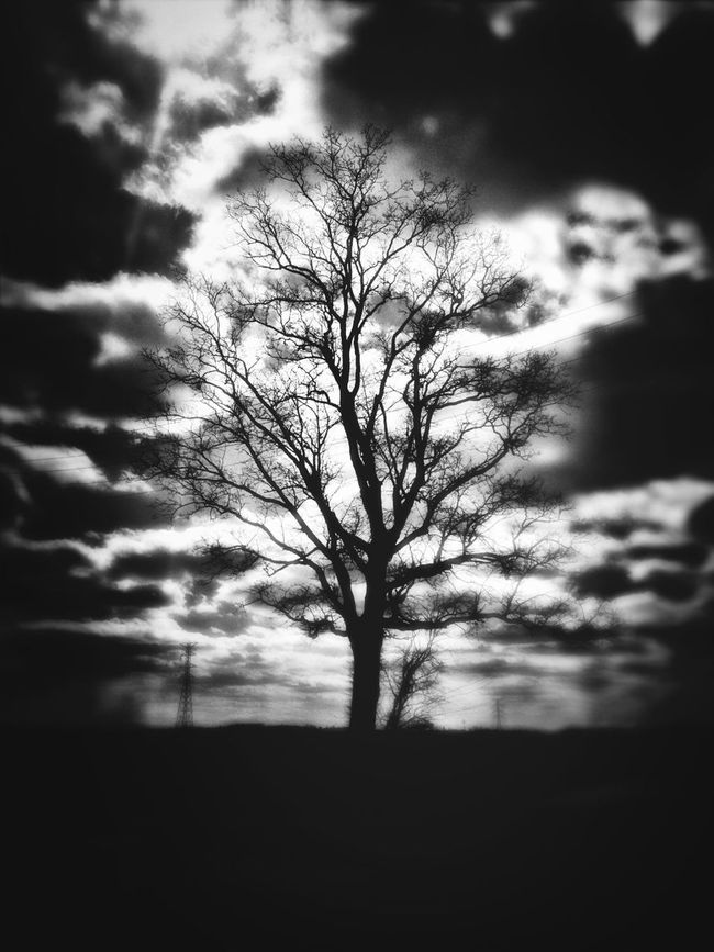 Traveling Blackandwhite Sky Tree