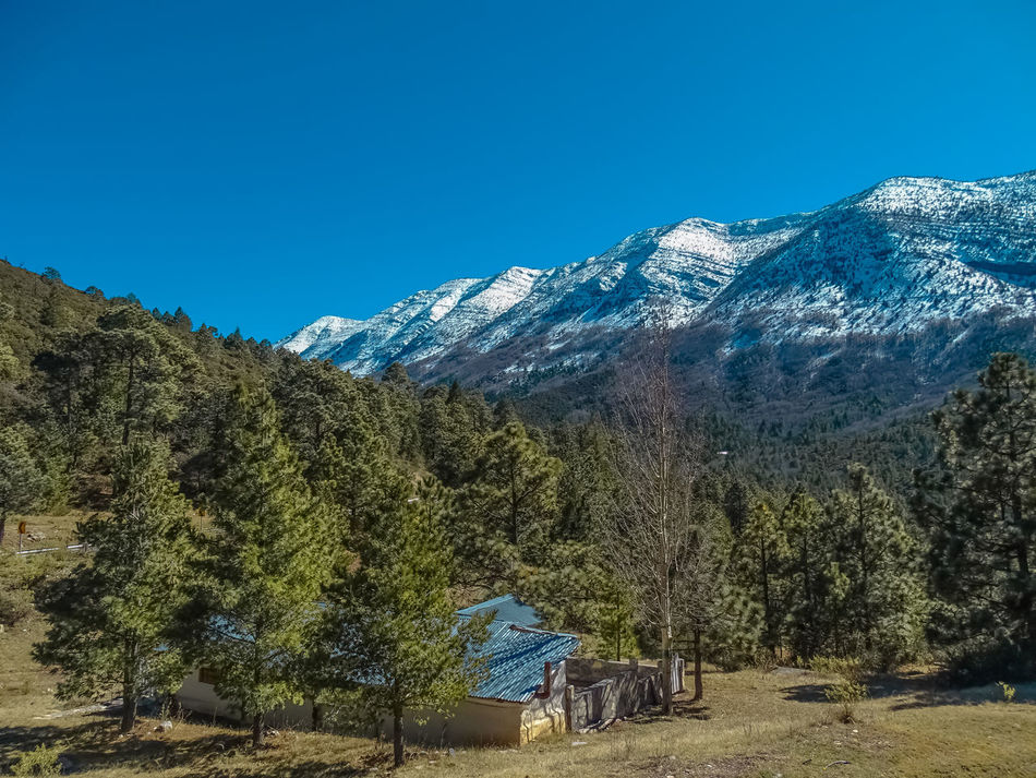 Monterreal in the Winter Beauty In Nature Day EyeEm Nature Lover Landscape Landscape_Collection Landscape_photography Mexico Mountain Mountain Peak Mountain Range Nature Nature Photography No People Outdoors Pinaceae Scenics Sky Snow Tree Winter