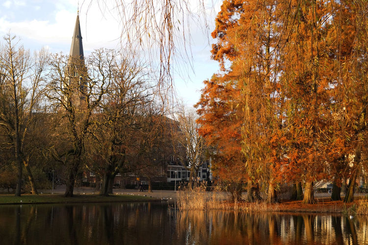 I took this photo in december, in Vondel Park, one of the most beautiful parks in Amsterdam. I took advantage of one of the rare sunny moments. #architecture #autumn #colours #Lake #leaf #Nature  #shades #Shadow #sun #sunset #travel #travelphotography #trees Beauty In Nature Change Growth Sky Tranquility Water EyeEmNewHere
