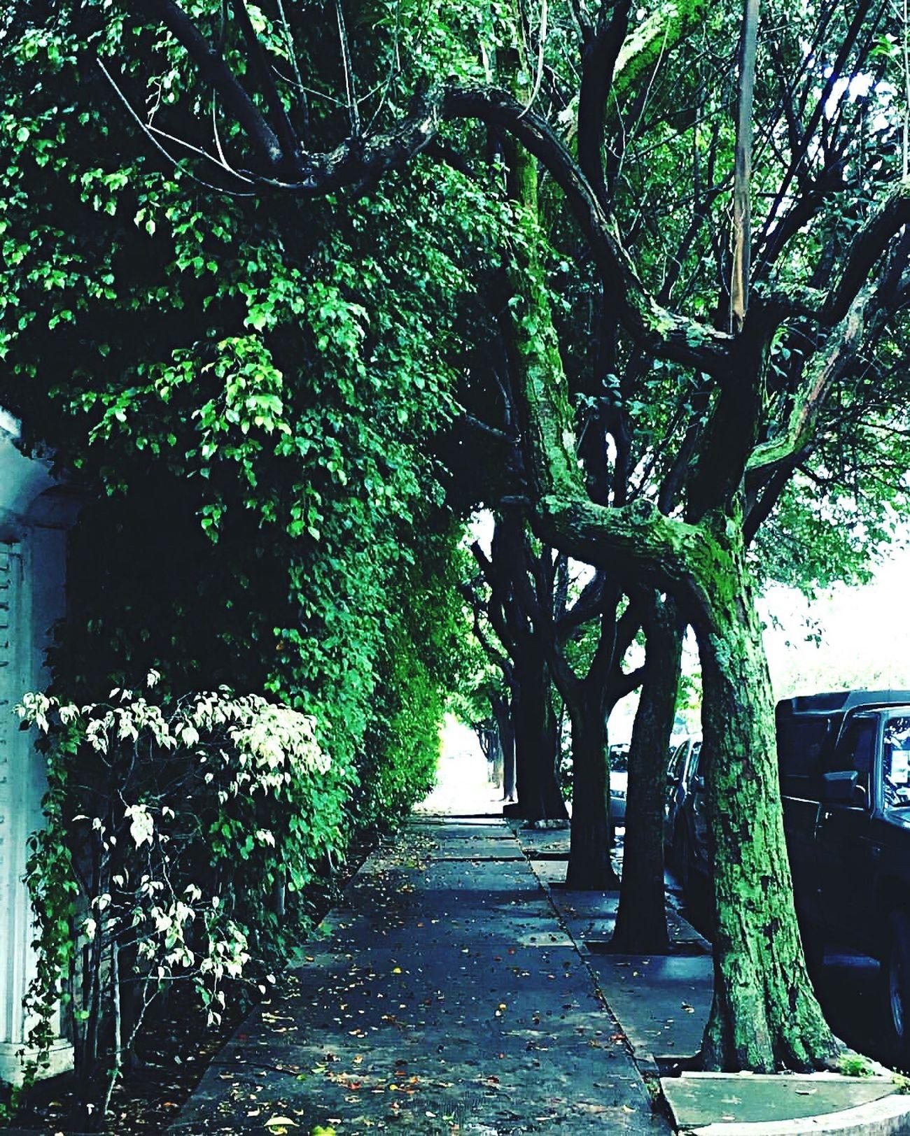 Cambiar de ruta puede ser placentero Tree The Way Forward Nature Green Branch Disfrutando De La Vida