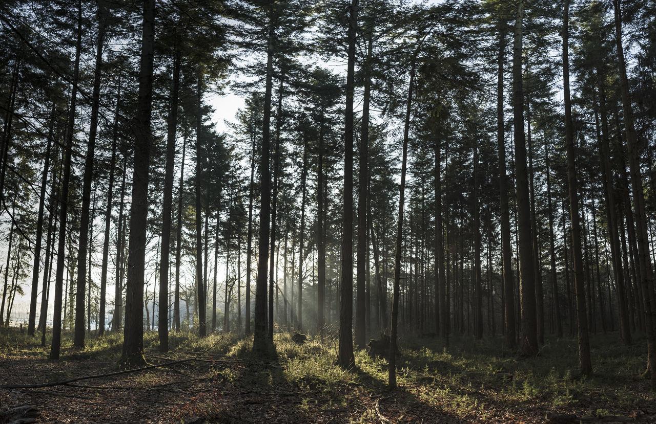 Forest Forest Photography Forestwalk Landscape Landscape_Collection Sun Sunrise The Netherlands Veluwe