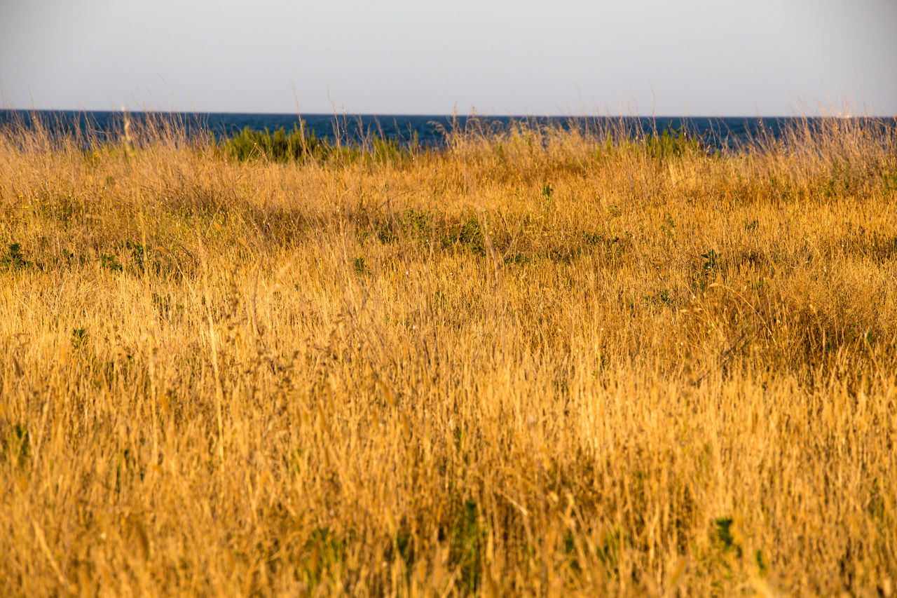 mediterranean vegetation Beauty In Nature Clear Sky Day Field Grass Growth Horizon Over Water Marram Grass Mediterranean  Mediterranean Sea Mediterranean Vegetation Nature No People Outdoors Plant Scenics Sky Tall Grass Timothy Grass Tranquil Scene Tranquility