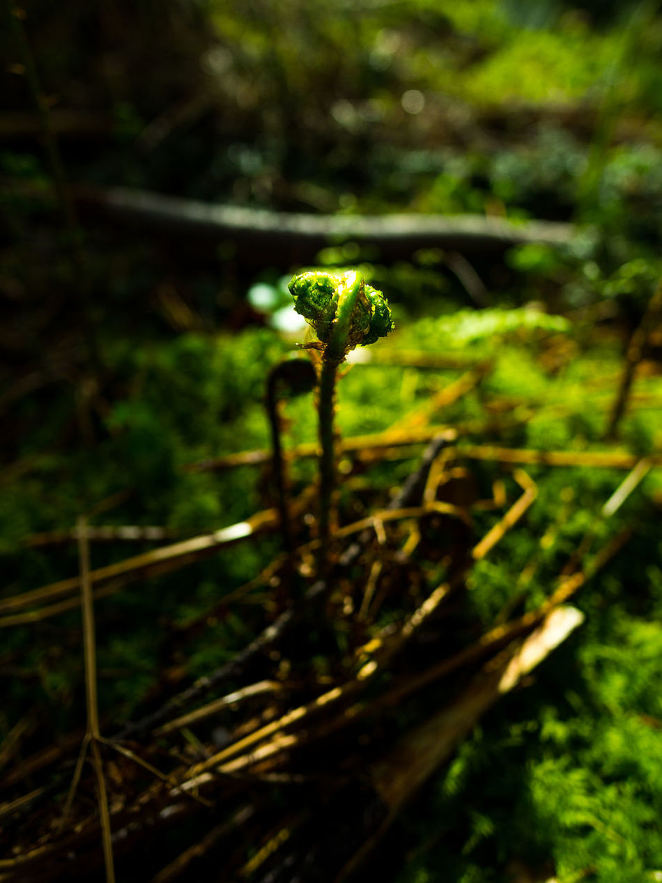 Beauty In Nature Close-up Day Fern Flora Focus On Foreground Forest Fragility Freshness Grass Green Color Growth Leaf Nature No People Outdoors Plant Saturday Amazing Forest Trees Forest Photography Life In Colors Landscape EyeEm Best Shots EyeEm Nature Lover