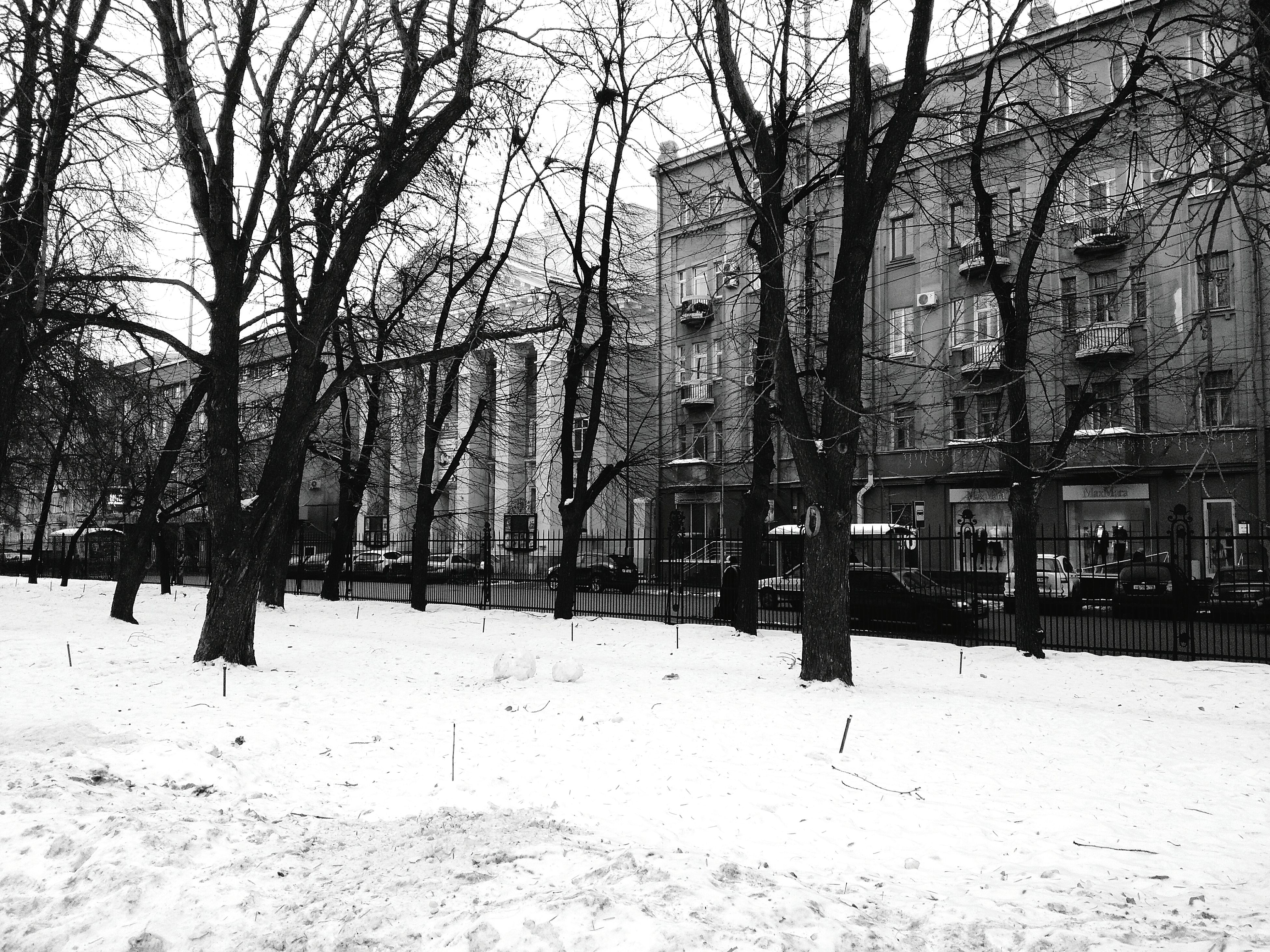 winter, tree, cold temperature, snow, outdoors, nature, day, no people, sky, architecture