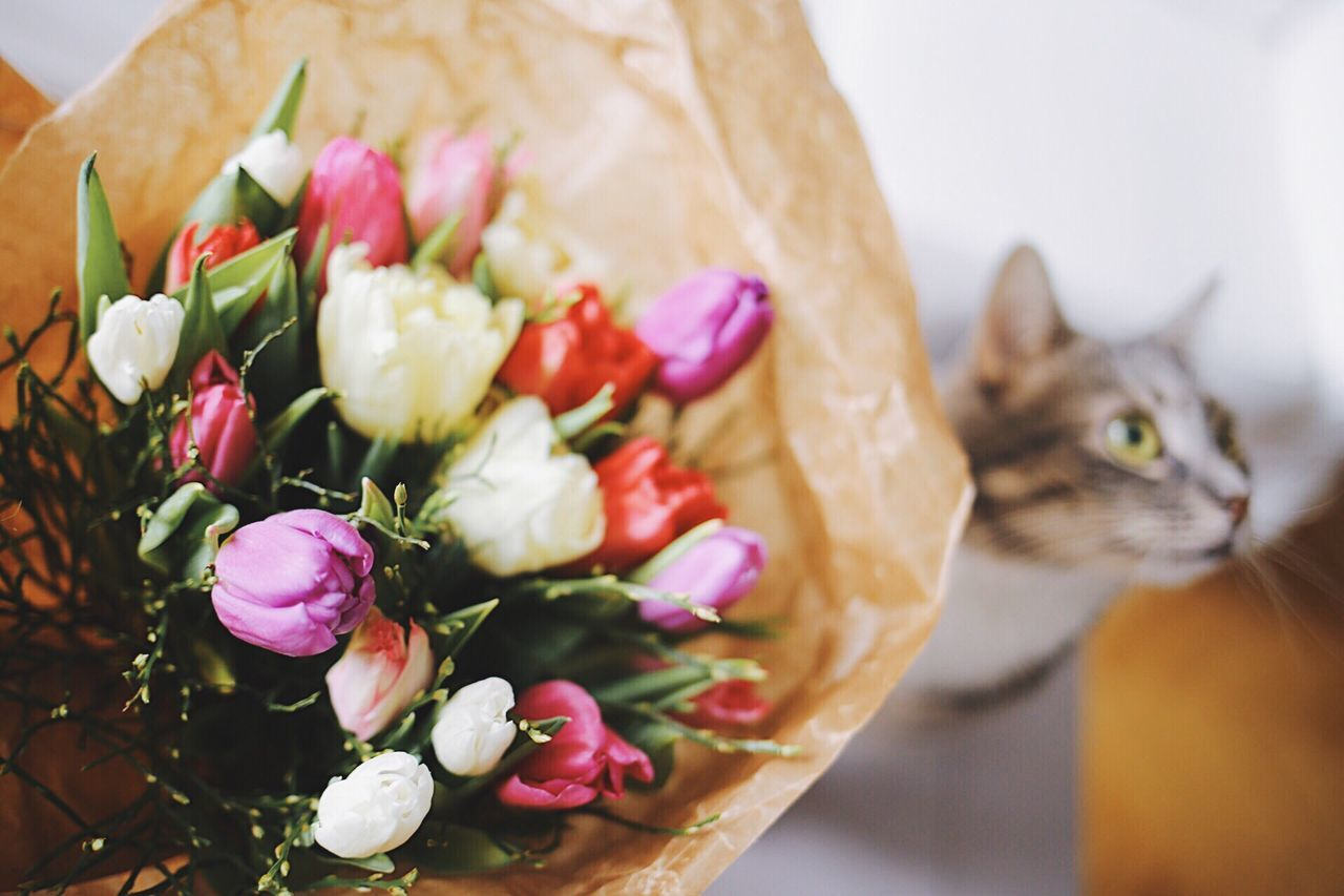 Domestic Cat Domestic Animals Pets One Animal Mammal Flower No People Animal Themes Plant Feline Close-up Indoors  Freshness Day Flower Arrangement Bouquet Flower Head Funny Faces Freshness Flower Collection Bouquet Of Flowers Cute Pets Blooming Tulip Spring Flowers