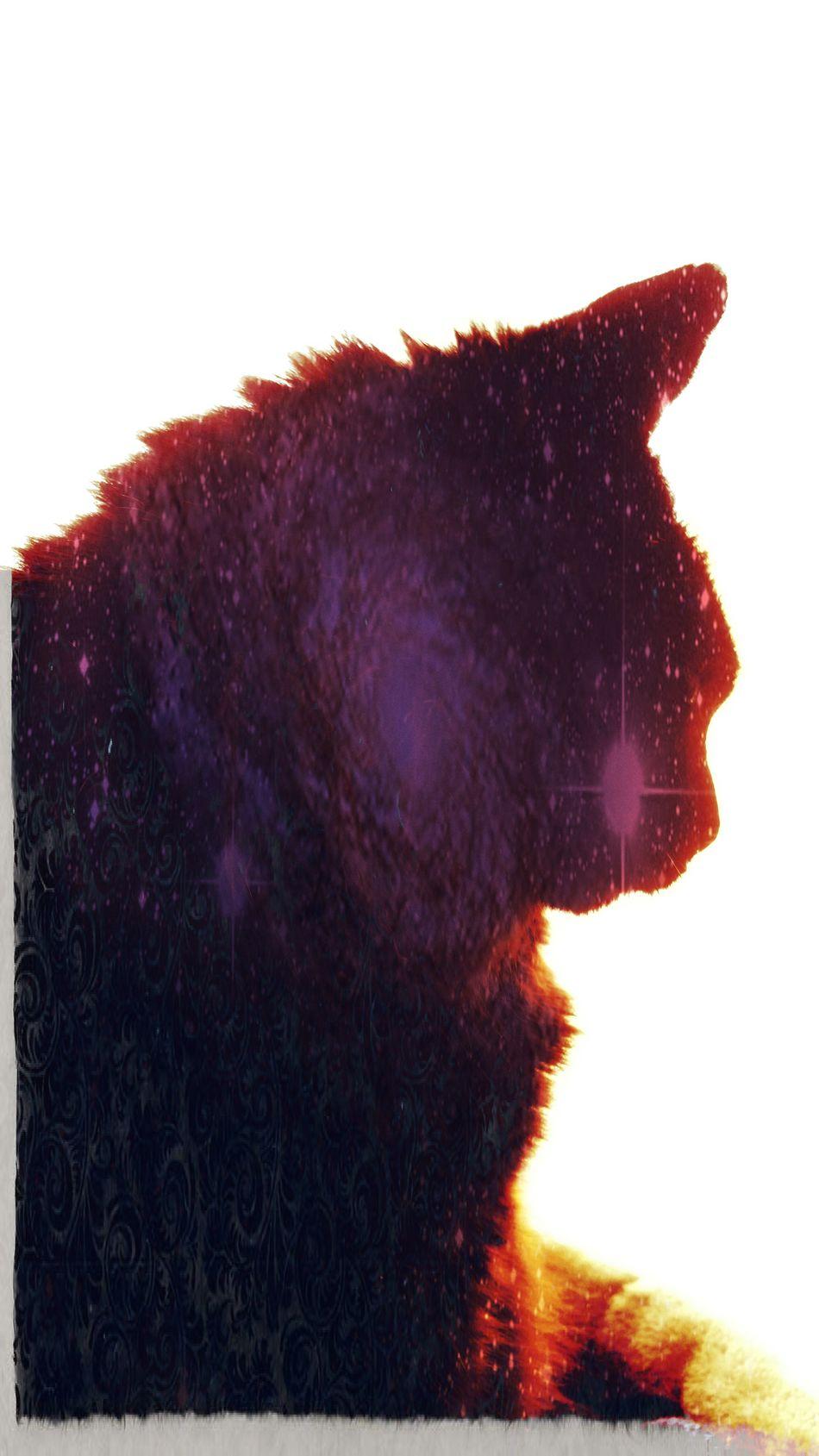 Cat BLackCat Edit Profile Sparkle Crazyediting