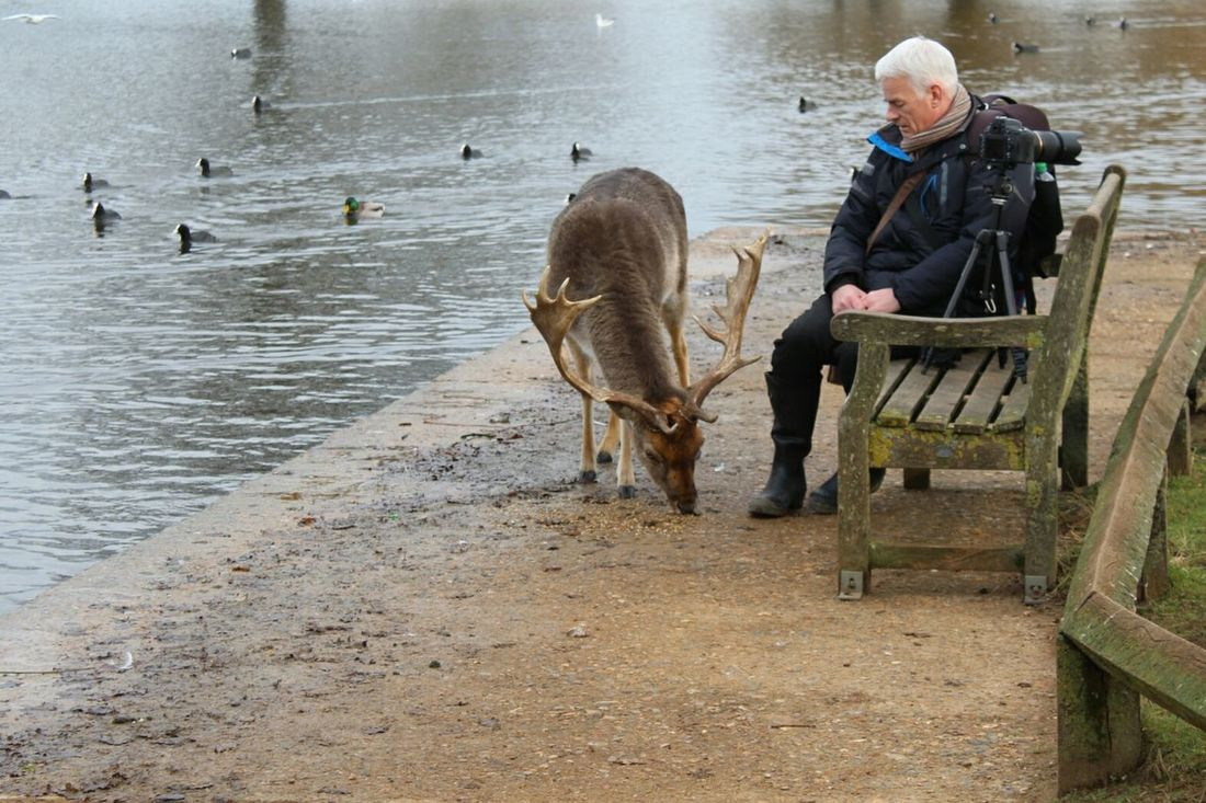 old buddies Nature Outdoors One Person Leisure Activity Men Beauty In Nature People Deer Day In The Park Beaty Of Nature Day Beauty In Ordinary Things Spring Is Almost Here Friends