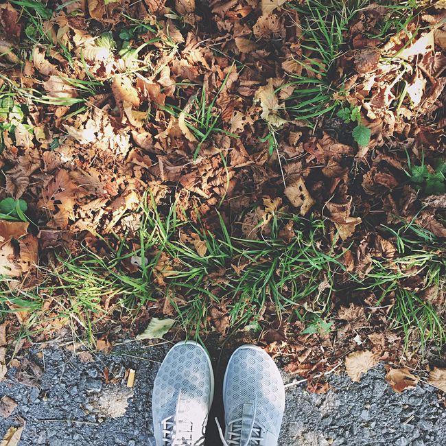 Fall Beauty Autumn