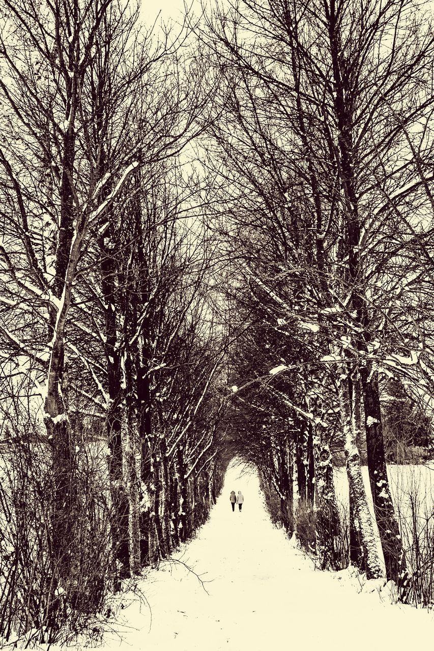 Footpath Amidst Bare Trees During Winter