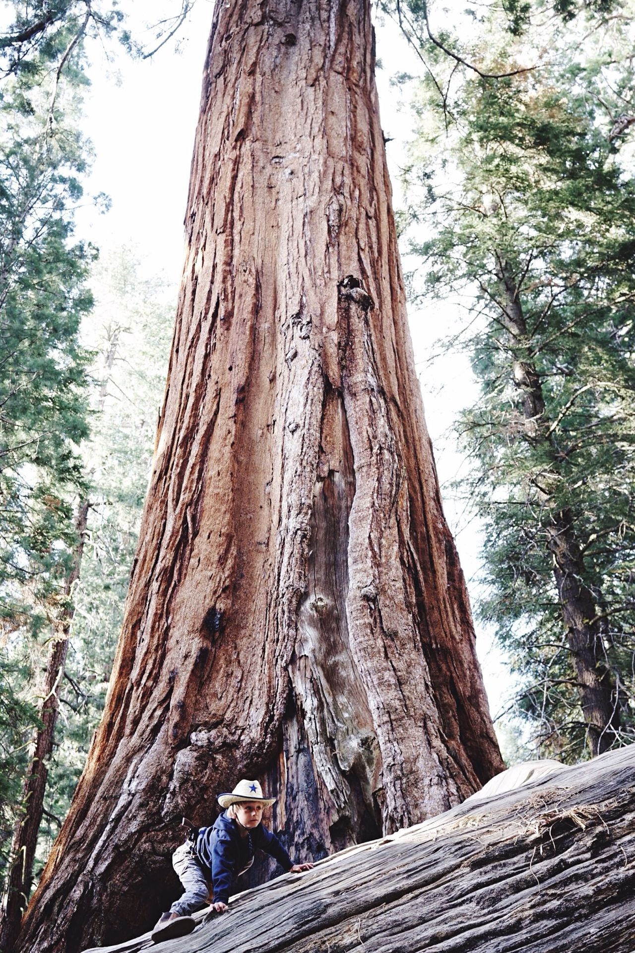 Sequoia Trees Nature EyeEm Best Shots Share Your Adventure California Little boy and giant tree The Adventure Handbook Things I Like The Great Outdoors - 2016 EyeEm Awards The Great Outdoors With Adobe The Secret Spaces