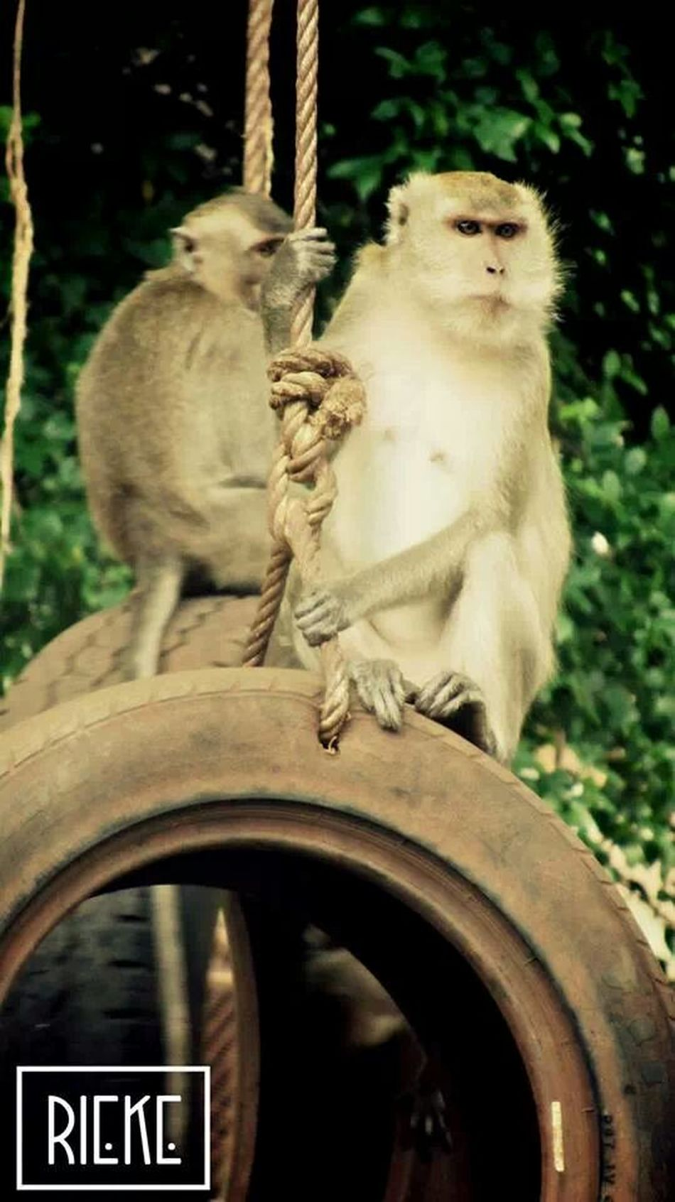king of the monkeys at tiger cave temple Thailand_allshots EyeEm Animal Lover Animal_collection TravelingAlphaWeAreJuxt.comAmpt_collectionShootermagAnimals