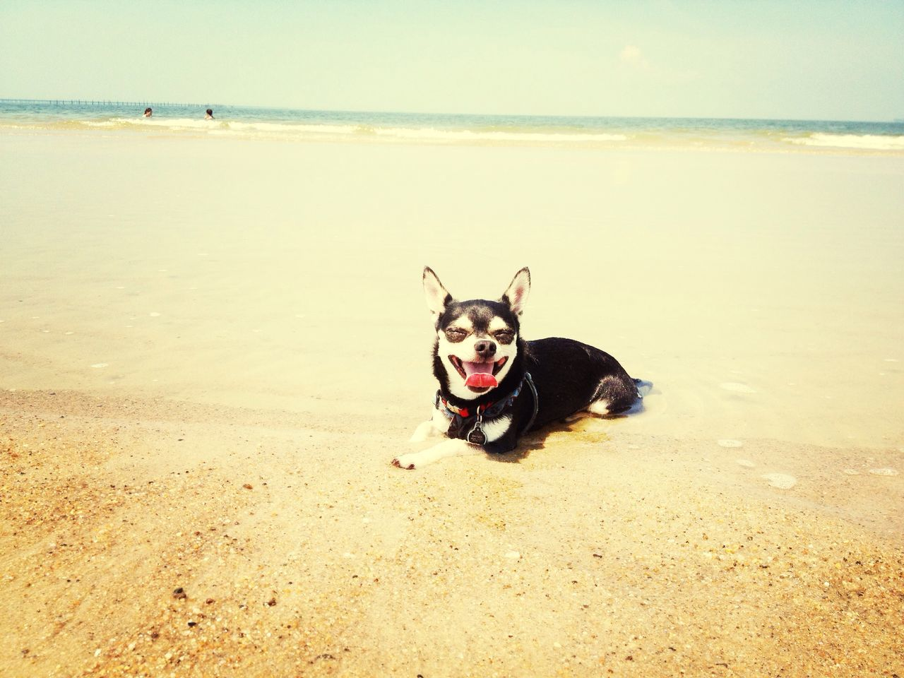 Beautiful stock photos of relax, Animal Themes, Beach, Day, Dog