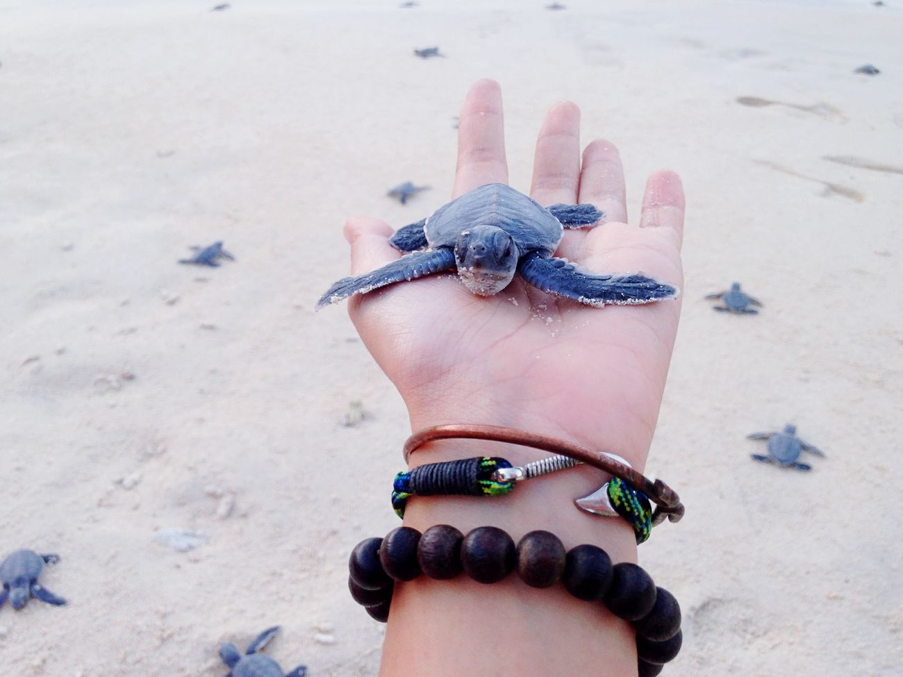 The Littlest Feet make the Biggest Footprints in our Hearts Newborn NewBorn Photography RePicture Growth Turtle Turtle Love Sea Turtle