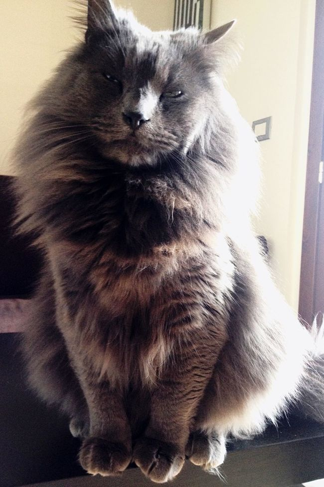 Zufolo Cat Lovers Cat Cats Cat♡ Gatto😸 Gatto Felinos Felino Zampette