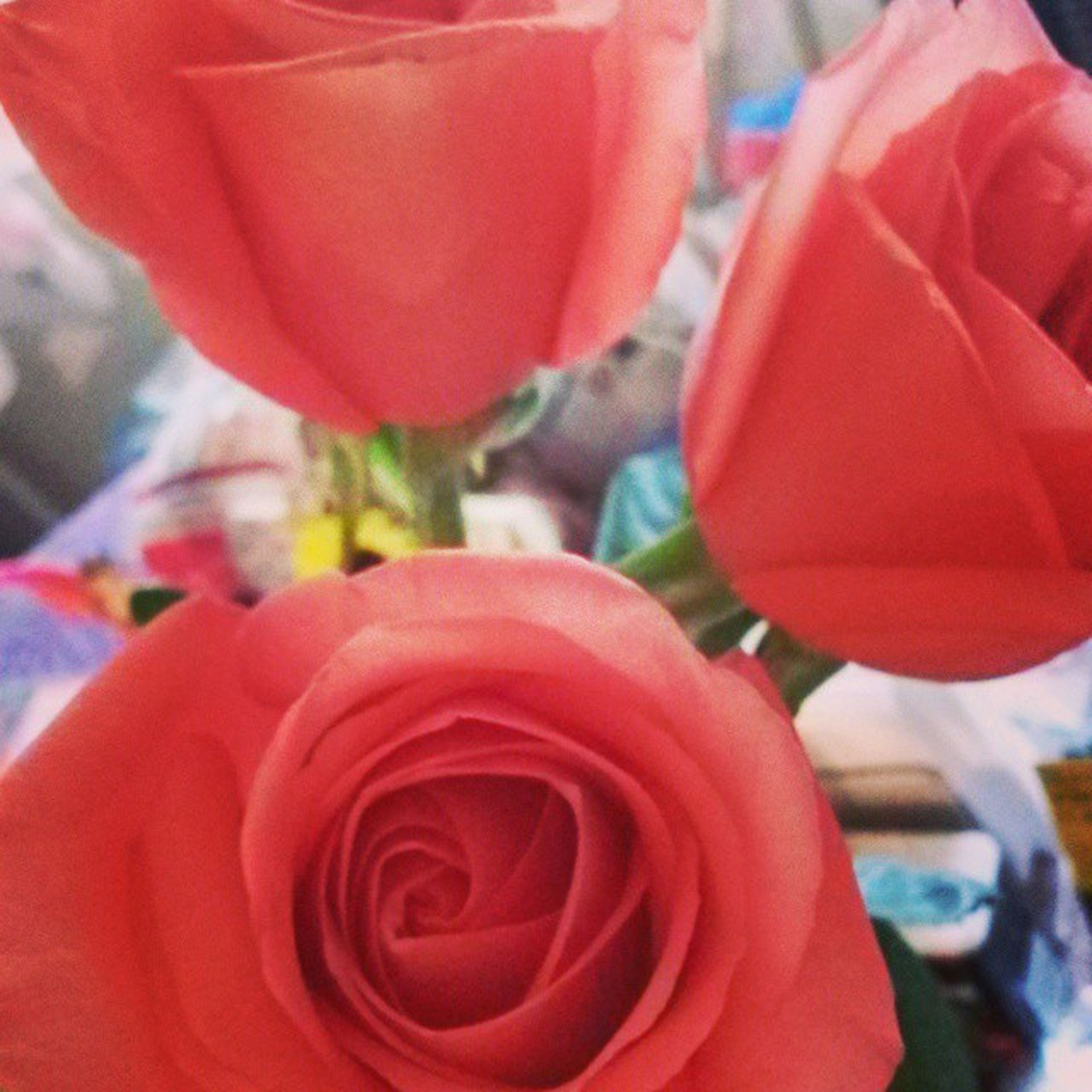 red, flower, focus on foreground, close-up, petal, freshness, rose - flower, flower head, fragility, selective focus, indoors, day, no people, nature, growth, incidental people, tulip, beauty in nature, plant
