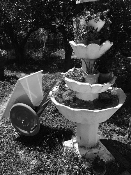 Sunlight Nature Outdoors Day Sicilia Capo D'Orlando Messina Statue Brunnen