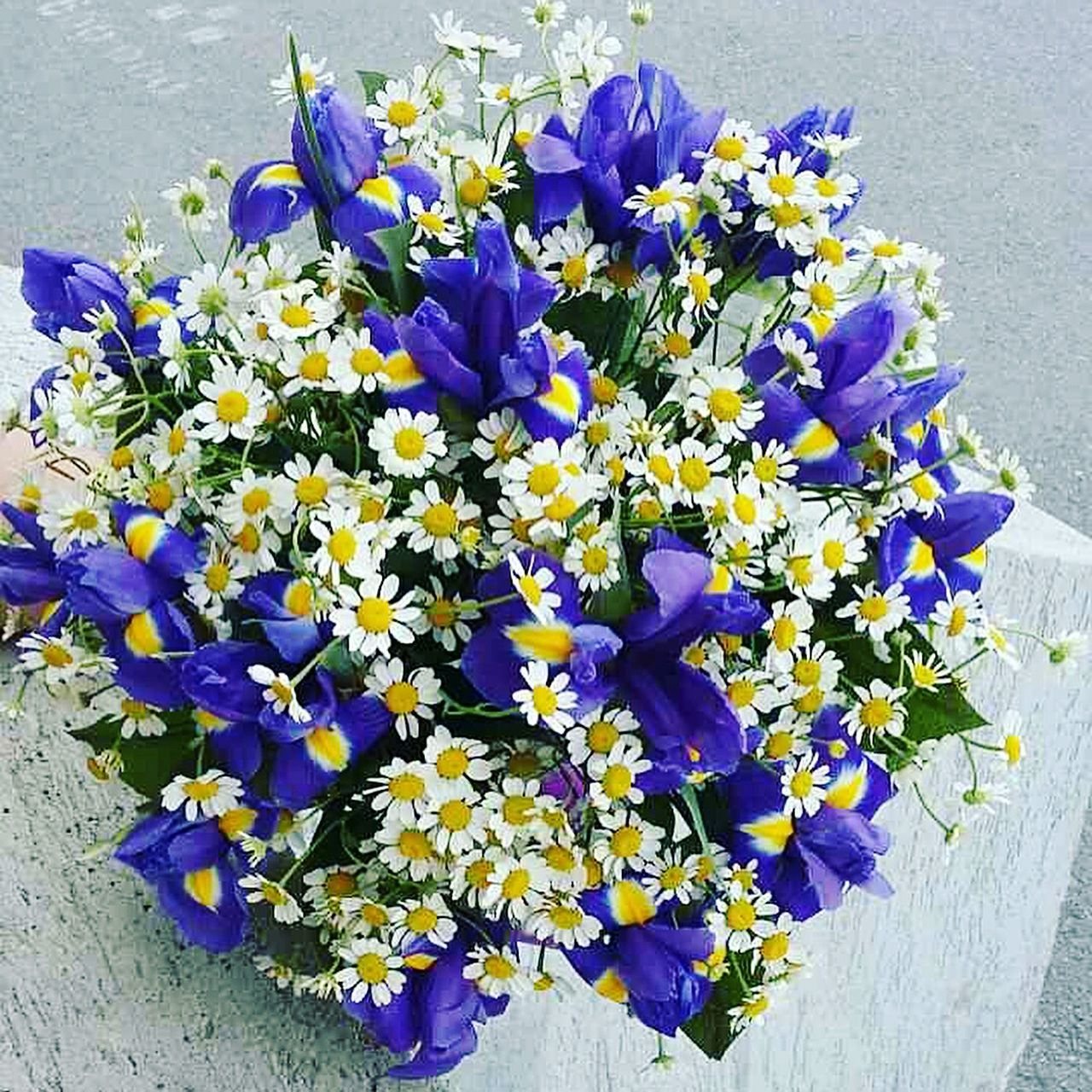 flower, purple, petal, fragility, growth, nature, beauty in nature, freshness, high angle view, no people, flower head, pansy, day, plant, outdoors, yellow, blooming, blue, close-up, crocus