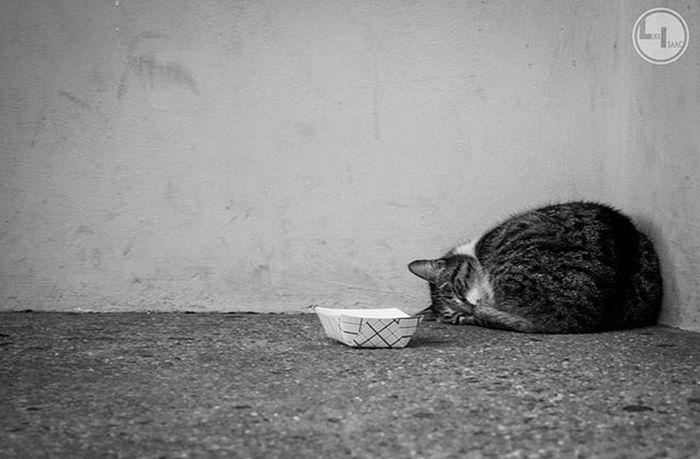 """Kitty corner 2..."" Likeisaac Moodygrams Agameoftones Attacktheshot Way2ill Createcommune Heatercentral Illgrammers Fatalframes Way2ill Reflectiongram Nyc_primeshot Nj Njphotographer Njphotography Newjersey VSCO Vscocam Njshooterz Jerseycollective"