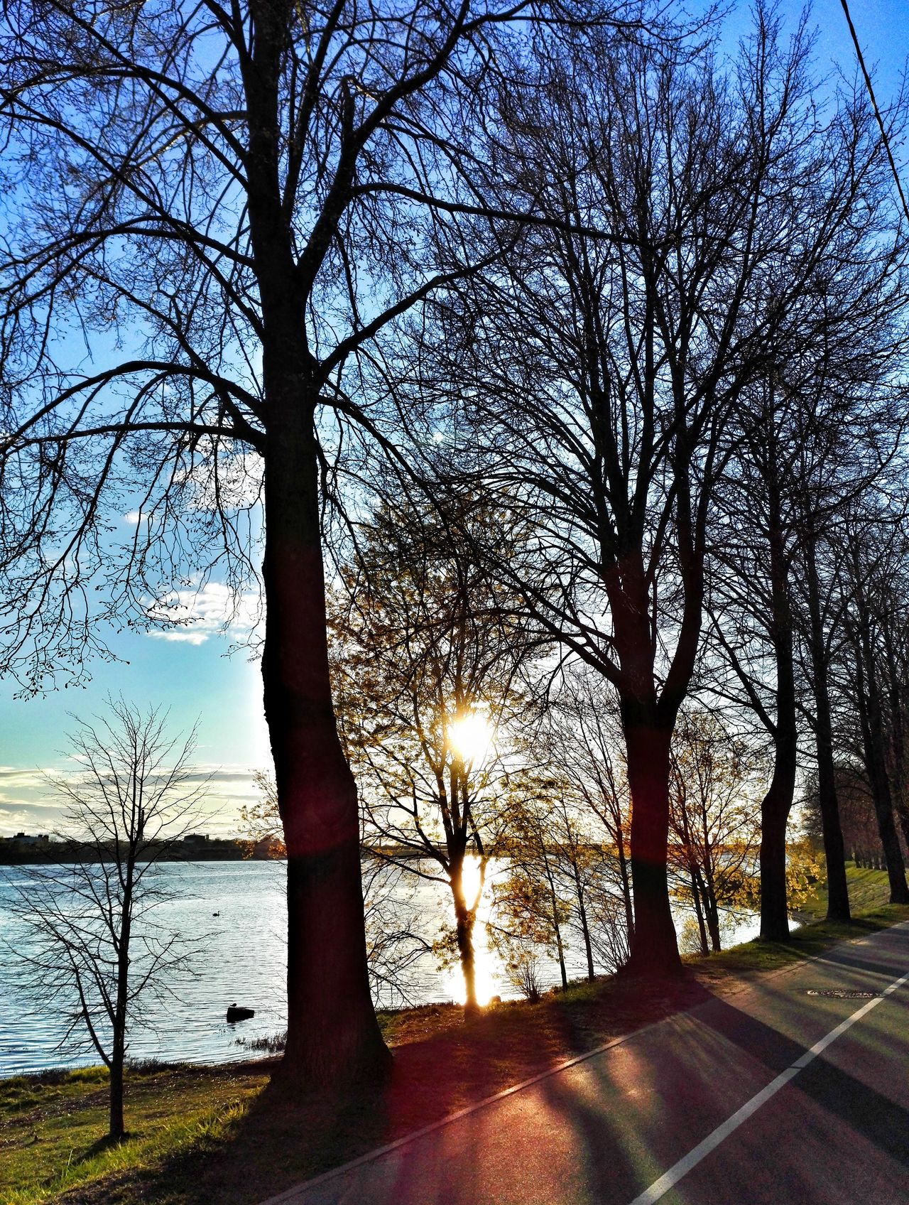 Tree Water Outdoors Day Sky Sunlight Nature Tranquility Beauty In NatureSpringtime Clear Sky Blue River Water_collection Cloud - Sky Sunset Beauty In Nature Bare Tree Sunset_collection Sky_collection
