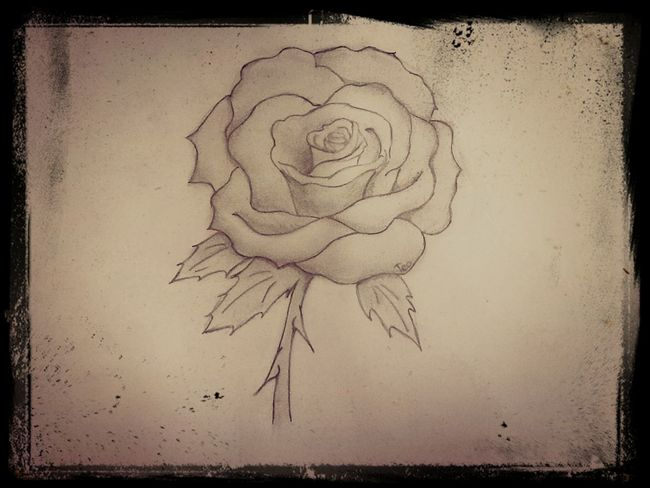 Pencil Drawing Roses Improving That's Me