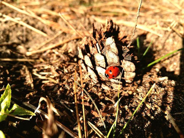 Ladybug in Autumn First Eyeem Photo