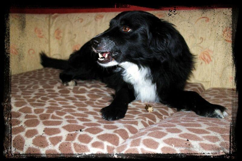 Animals Dog Dogs
