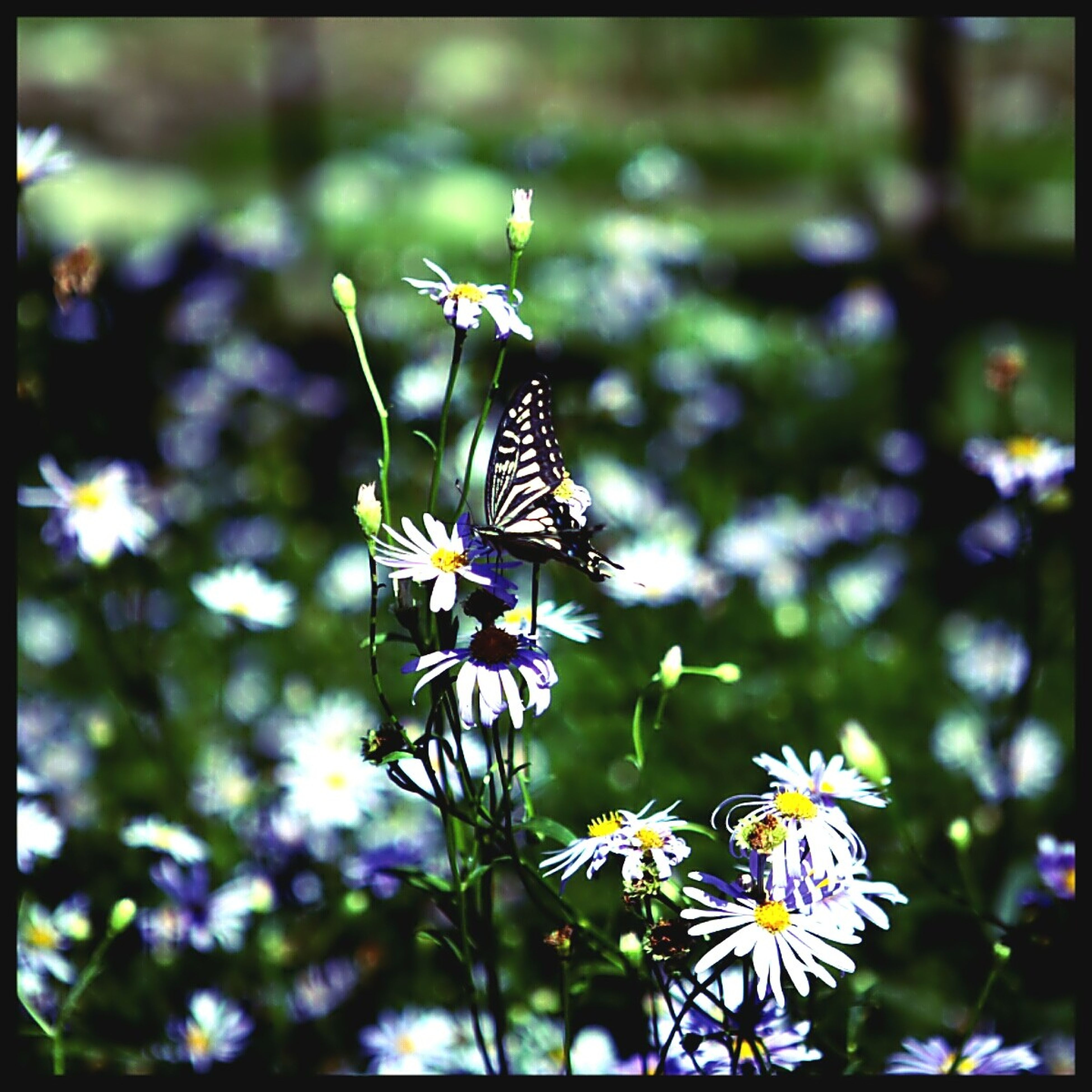 flower, one animal, animals in the wild, animal themes, insect, wildlife, focus on foreground, fragility, butterfly - insect, transfer print, butterfly, beauty in nature, plant, petal, nature, freshness, auto post production filter, close-up, growth, pollination