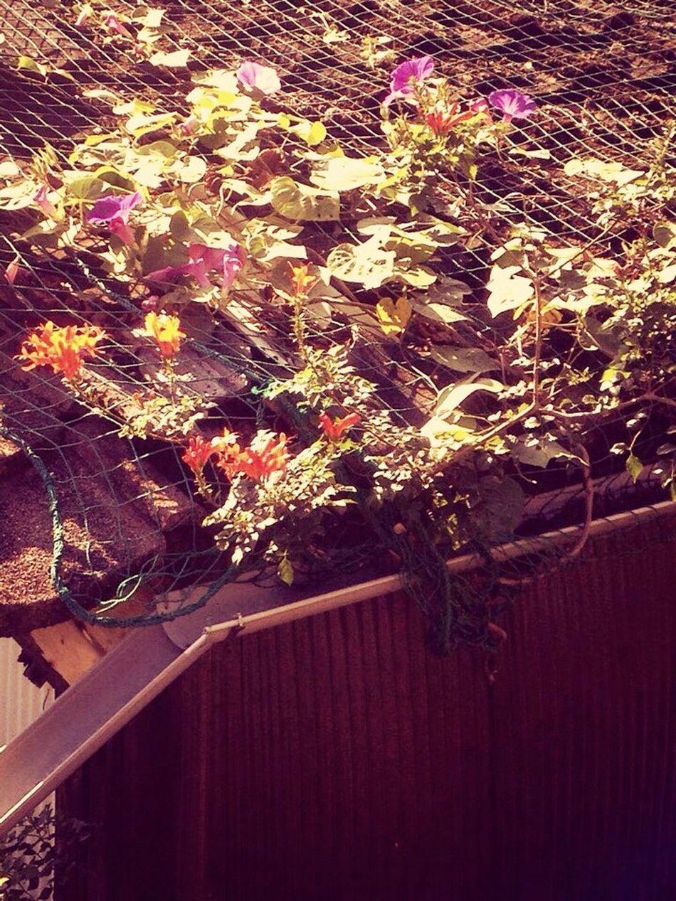 屋根の上に花畑。 花 昼 屋根
