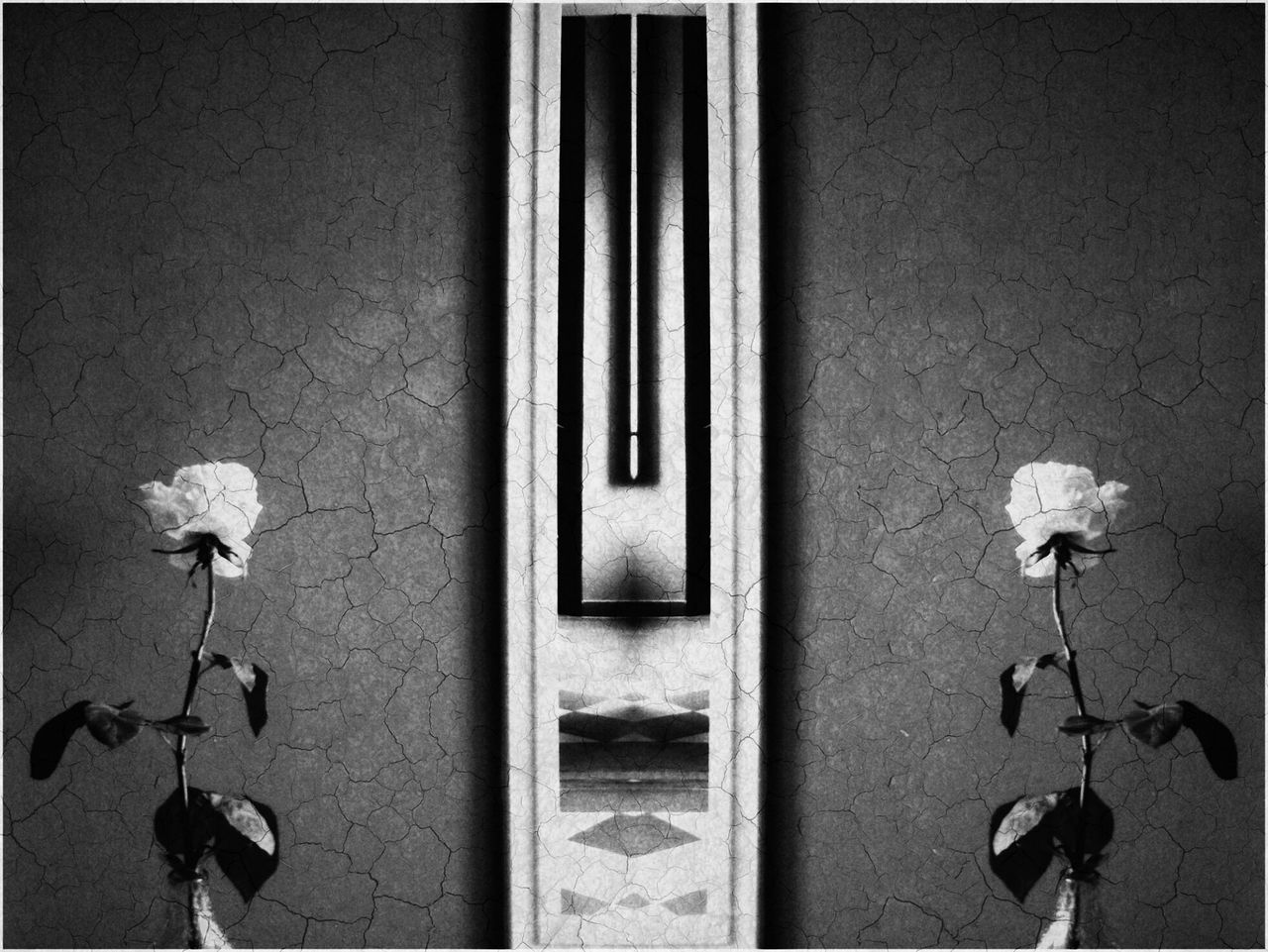 Backgrounds Black And White Blackandwhite Flower Flowers Outdoors Roses Roses Flowers  Wall Wallpaper White Rose Exploring Style