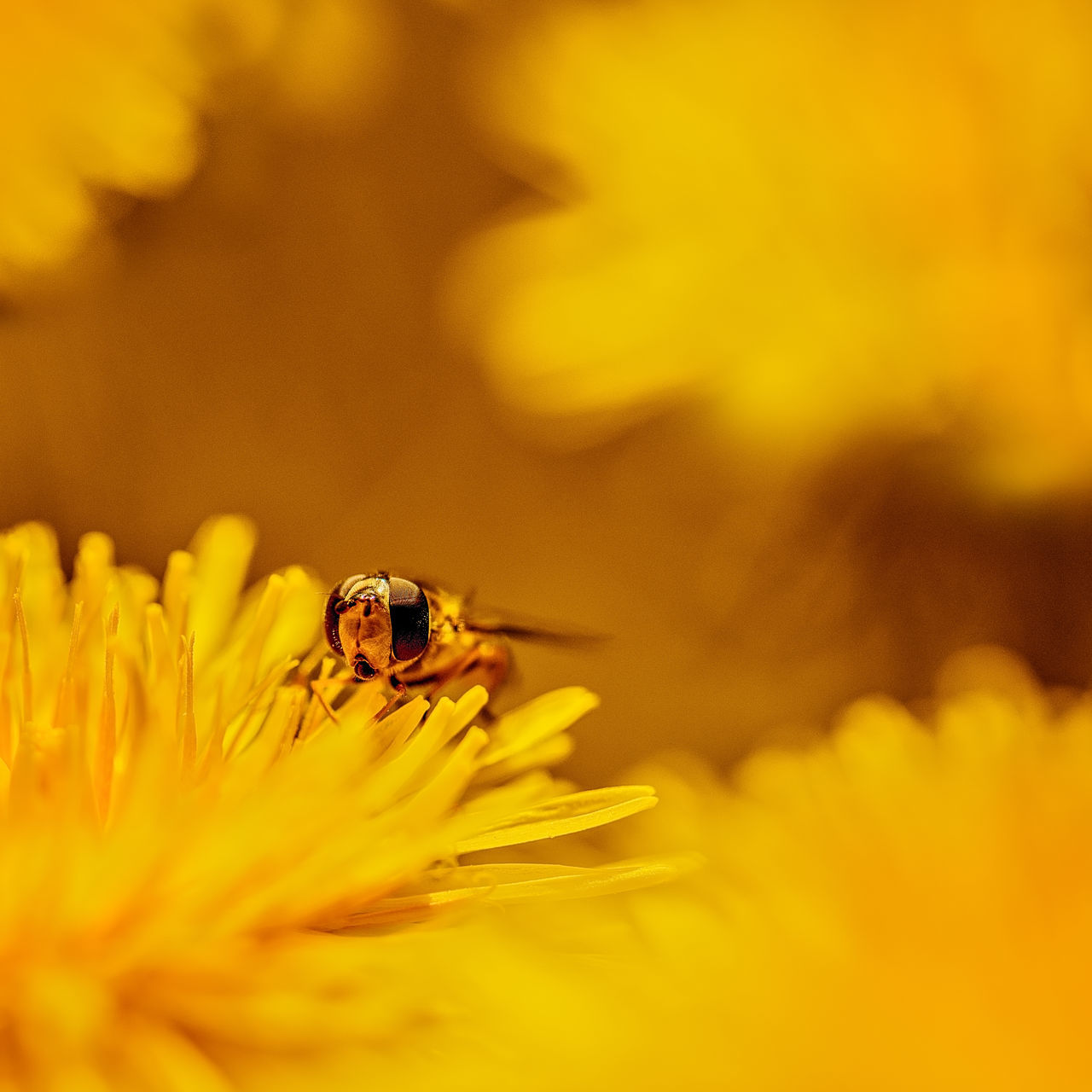 Beauty In Nature Bee Day Flower Flower Head Nature Outdoors Plant Selective Focus Yellow