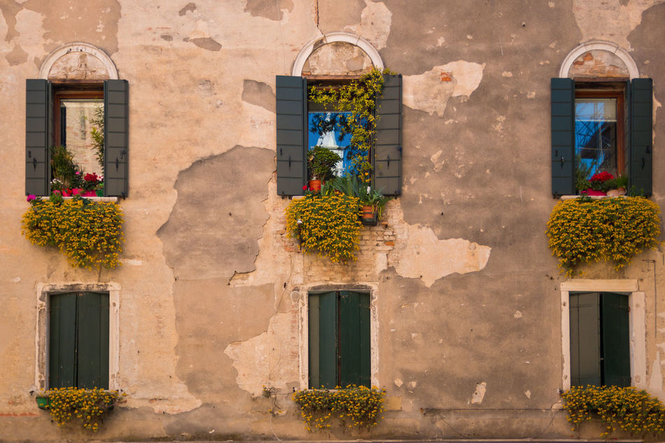 Architecture Blooming Building Exterior Day Flower Growth Italy No People Outdoors Plant Venice, Italy Window Window Box
