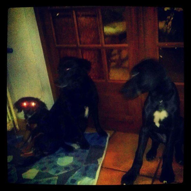 Dogallemand Dog Demon Delire Love Chien