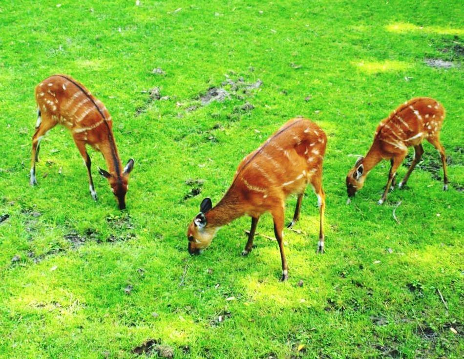 Zoo Wroclaw, Poland Wroclaw Trawa Pets Zwierzęta