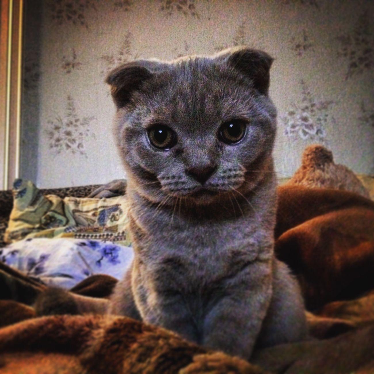кот Cat доброта Россия Russia Followme Beautiful