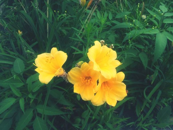 Yellow Flower Summer Flowers Scenery Of The Town Enjoy The View
