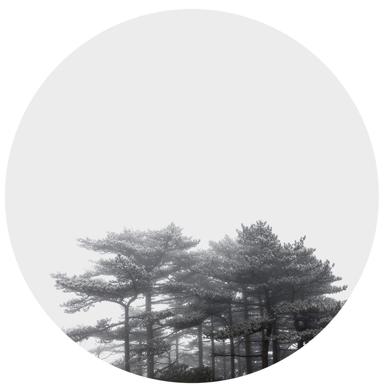 White Background No People Tree Shape Outdoors Watercolor Painting China Ink Pattern Huangshan Mountains ELLIPSE Nature Speech Bubble