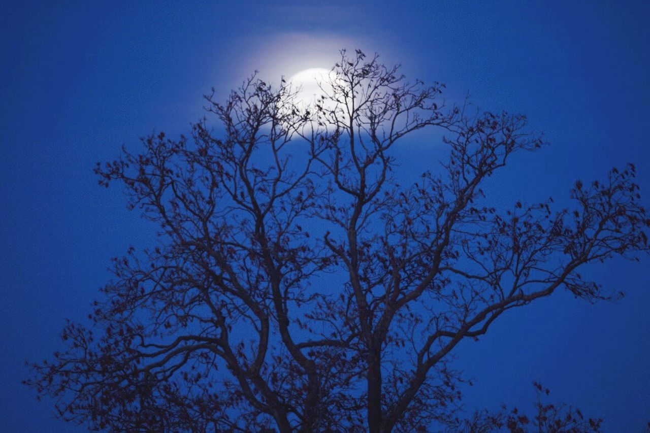 Moon at sunrise in Northamptonshire with trees Moon Sunrise Tree Trees Morning Weather Weather Channel Northants Northamptonshire Northampton Uk United Kingdom