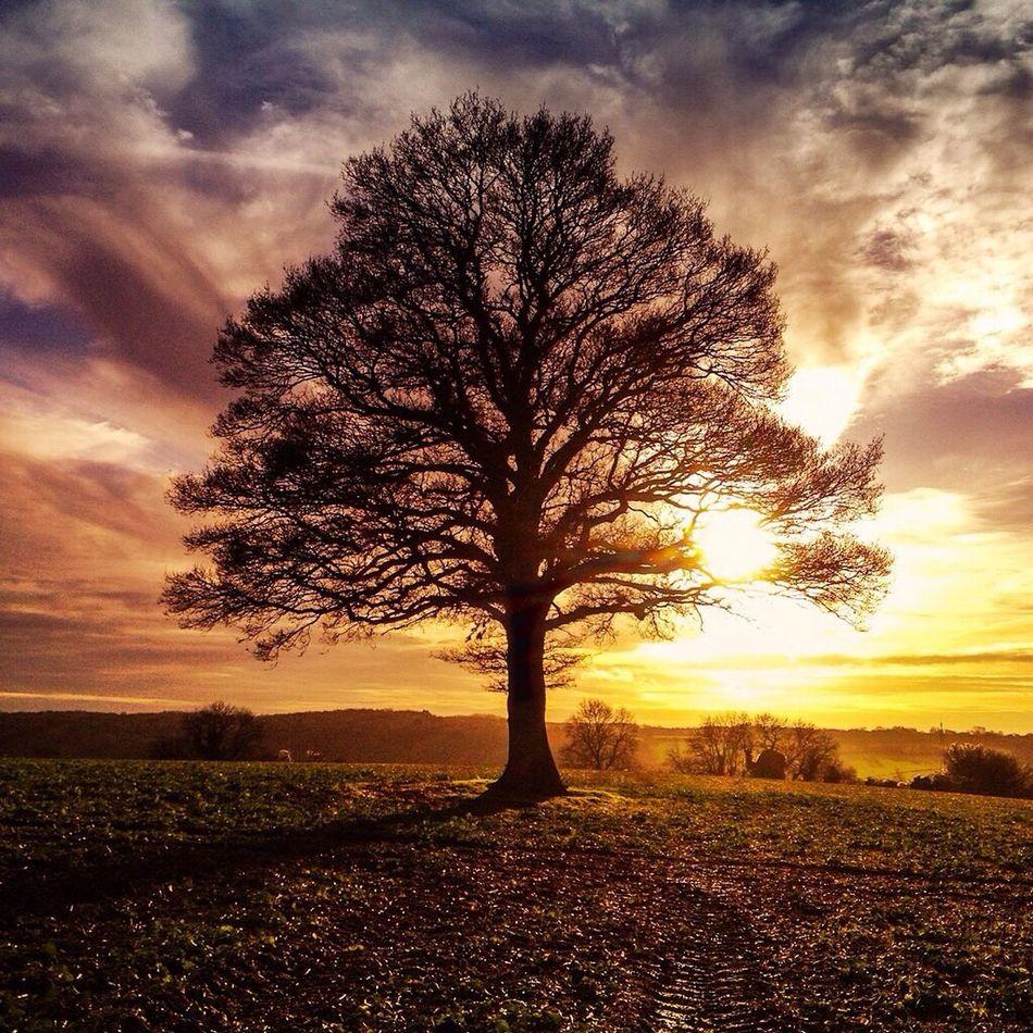 The solo tree, Chesham Enjoying Life Tree Colour Chesham