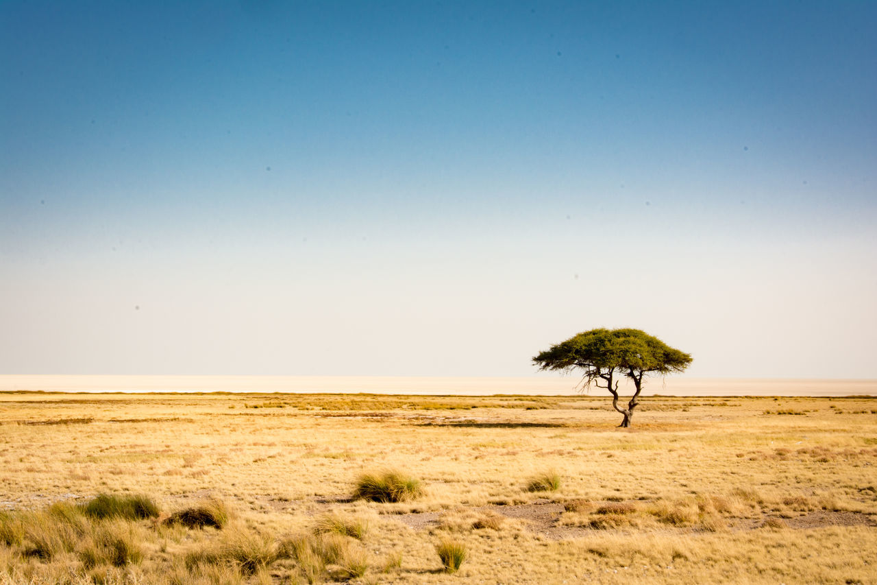 Acacia Tree Arid Climate Beauty In Nature Clear Sky Clear Sky Day Desert Etosha National Park Grass Horizon Horizon Over Land Landscape Lonely Namibia Nature No People Outdoors Pan Panorama Sand Scenics Sky Tree The Great Outdoors - 2017 EyeEm Awards
