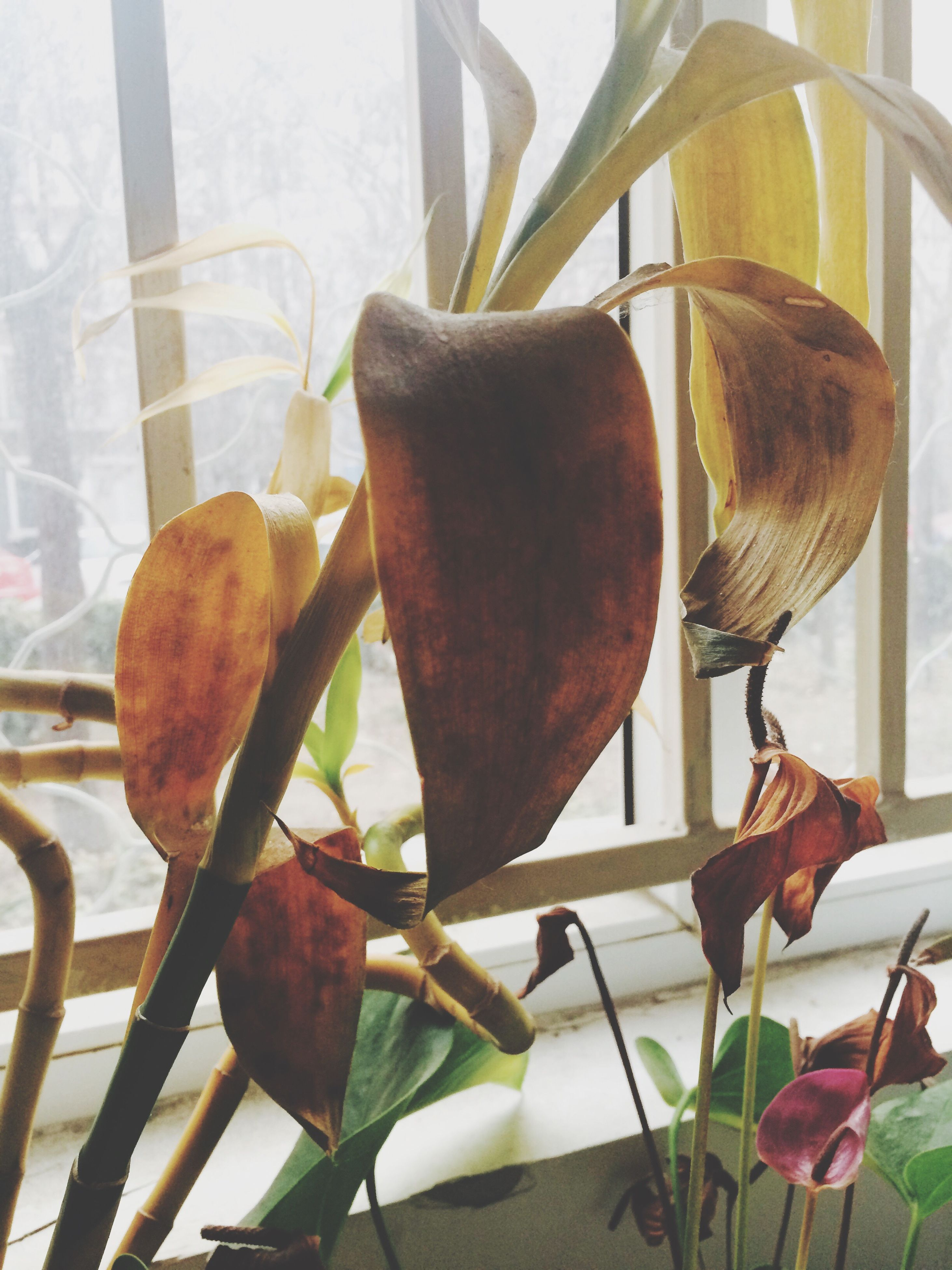 close-up, leaf, freshness, growth, plant, focus on foreground, indoors, nature, fragility, day, table, no people, stem, beauty in nature, dry, food and drink, sunlight, brown, flower