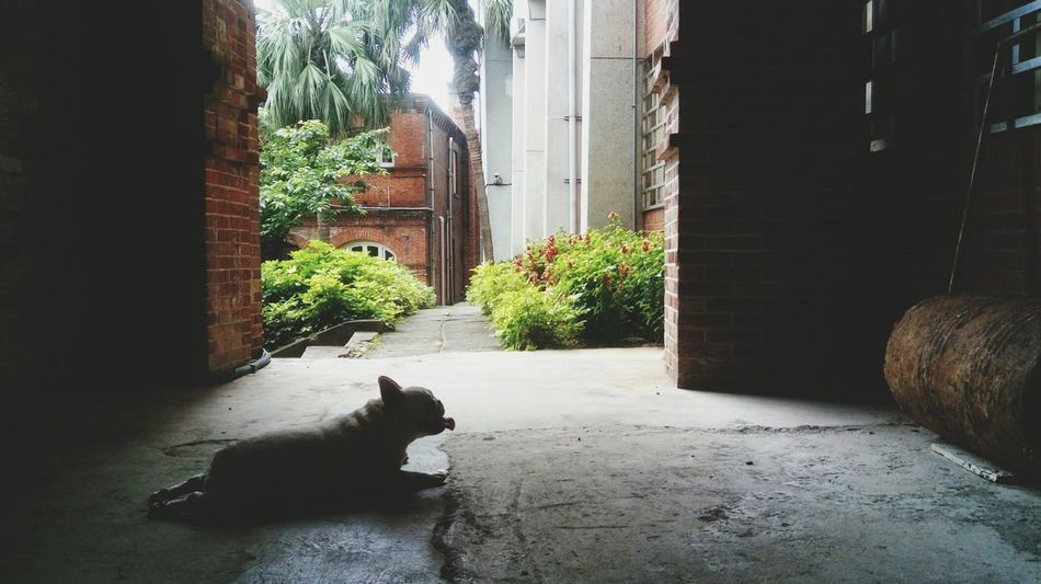 Beautiful stock photos of bulldog, Animal Themes, Architecture, Built Structure, Day