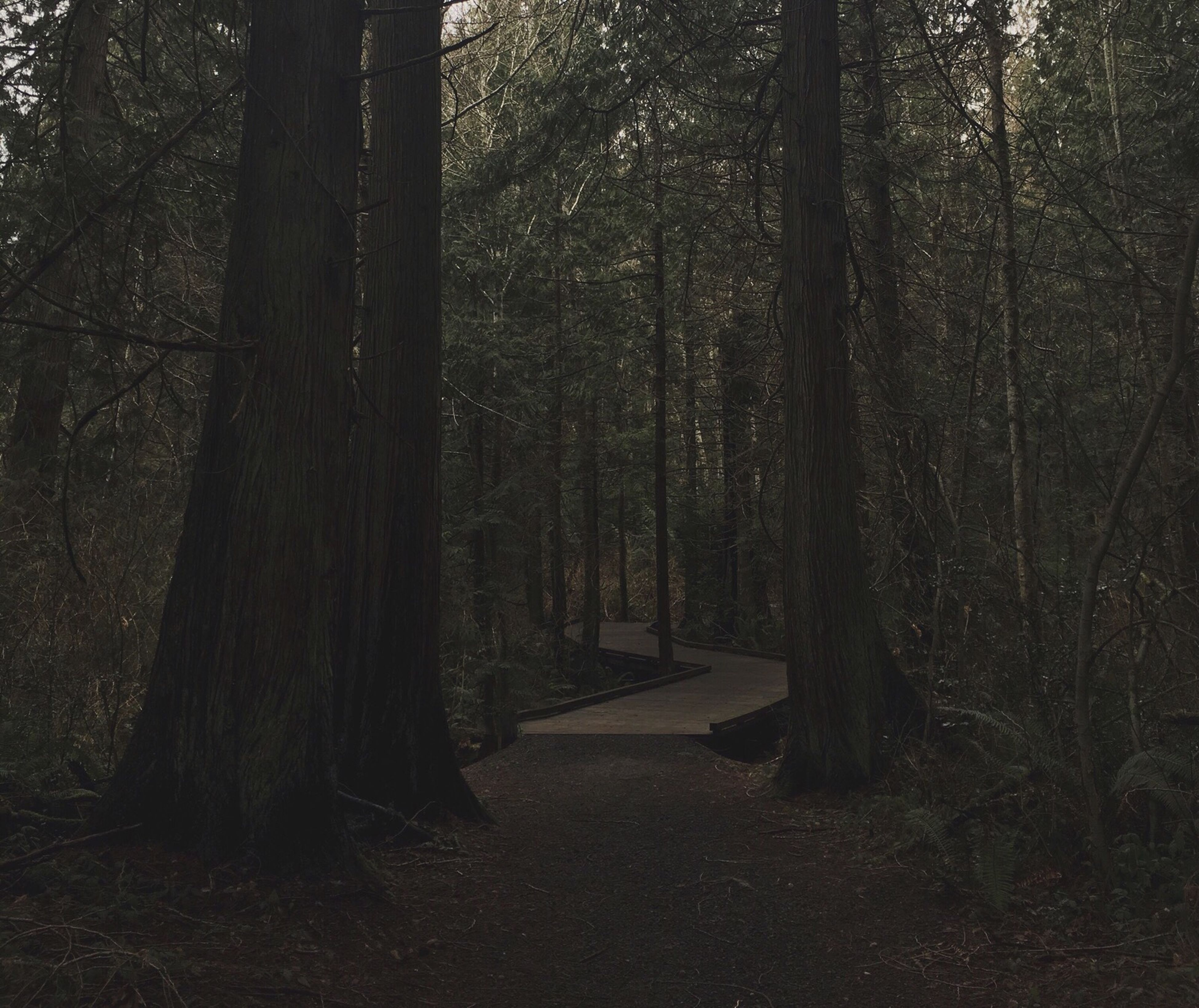 tree, forest, the way forward, tree trunk, tranquility, tranquil scene, woodland, nature, growth, beauty in nature, footpath, sunlight, scenics, non-urban scene, branch, empty, no people, outdoors, shadow, day