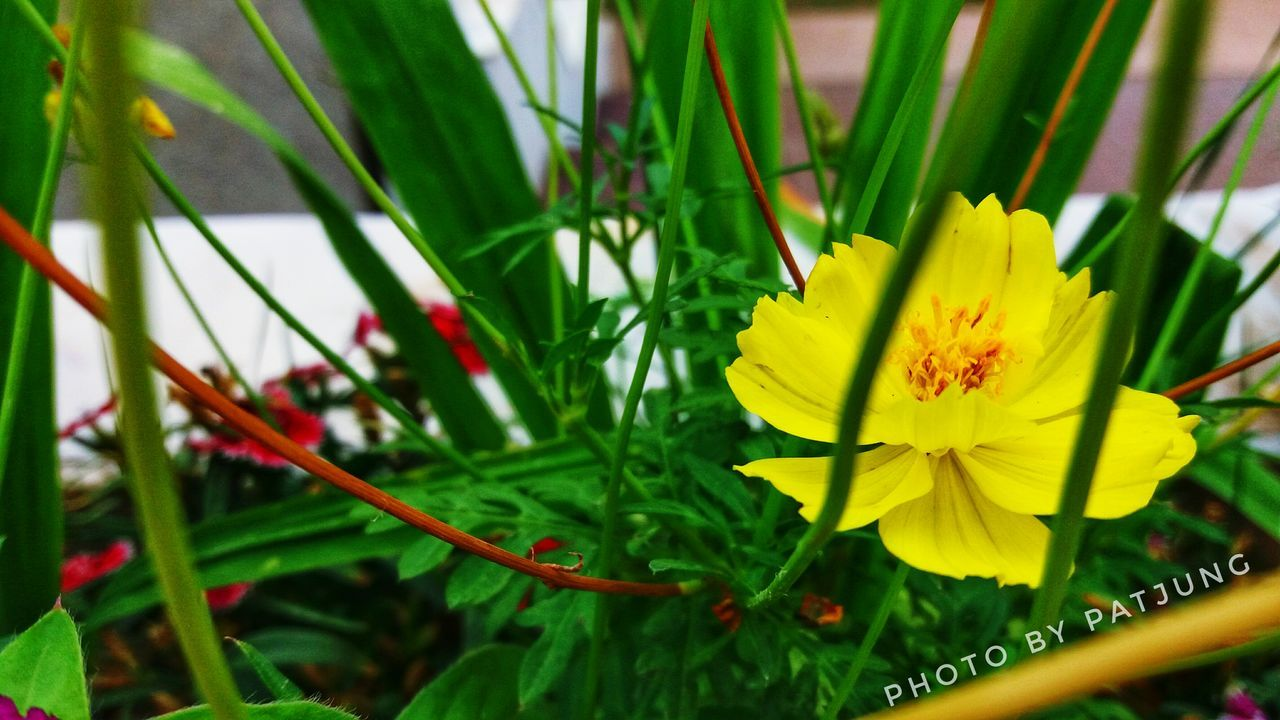 Nature is creator every thing in this world. Flower Yellow Flower Nature EyeEm
