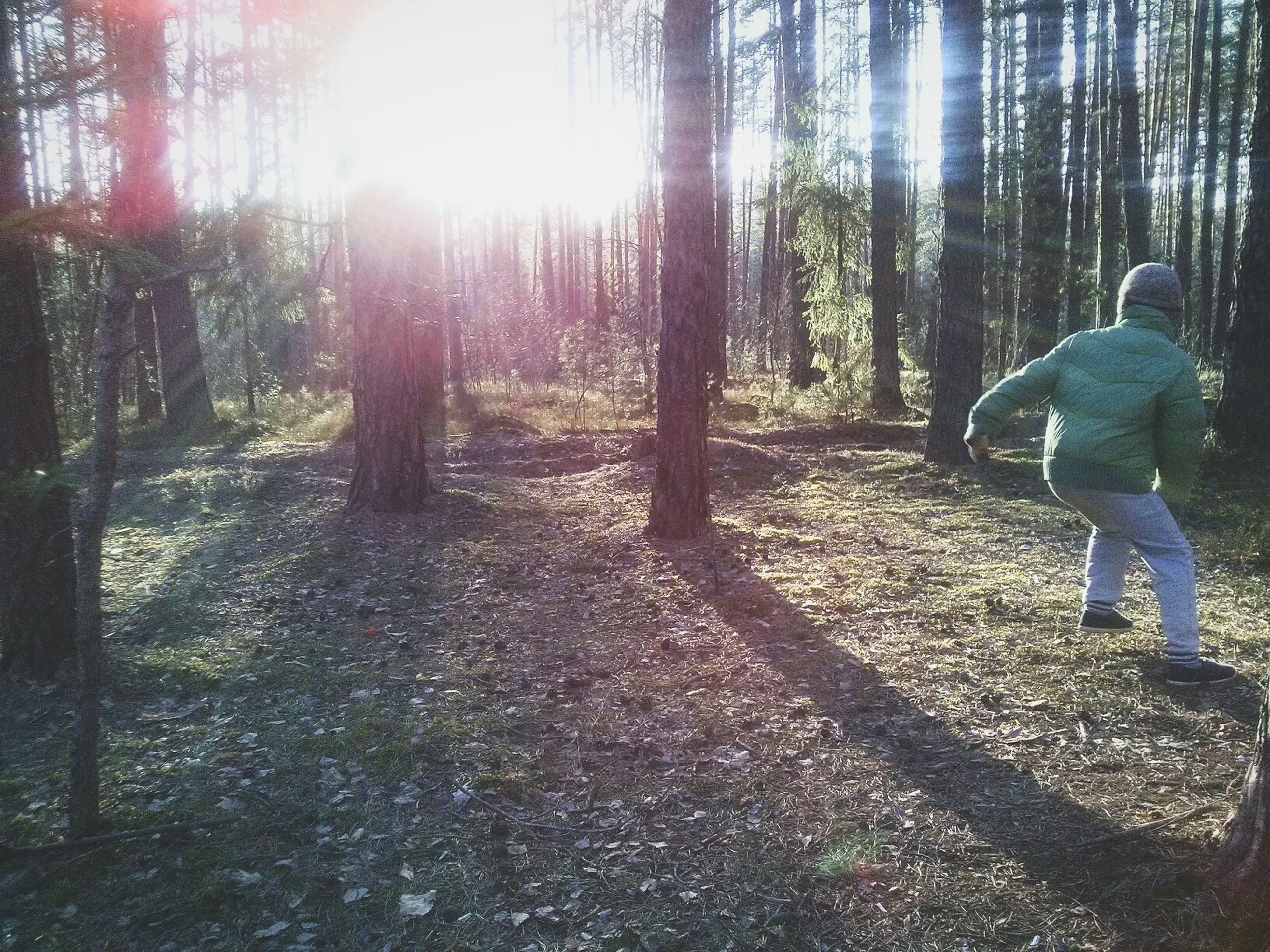 sunday. Tree Day Sunlight Nature Forest Outdoors One Person Beauty In Nature
